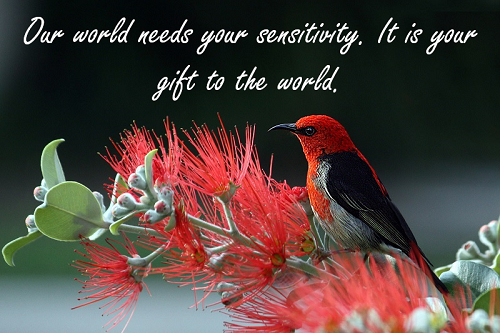 gift bird sm