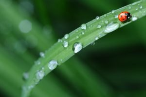 RAIN: A Practice of Radical Compassion